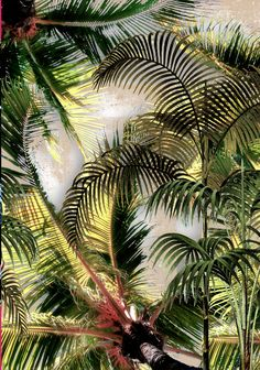 moody tropical - Dash Studio #tropical #print