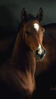 Lovely young horse!