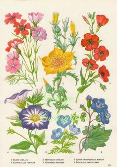 Vintage Botanical Print Antique RUBRUM, plant print botanical, bookplate art print, wild flowers plants plant wall print art illustration