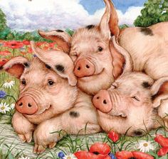 debbie cook, pig - Google Search                                                                                                                                                                                 More