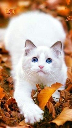 2969 Best Cutest Cats And Kittens Images Cats Kittens