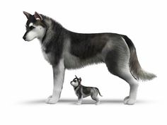 Sliders Required sims3pack file format Sims 4 Pets, Sims 3, File Format, Sliders, Husky, Fandoms, Content, Games, Dogs
