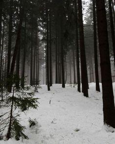#depressed #forest #fog #foggy #creepy #scary #winter