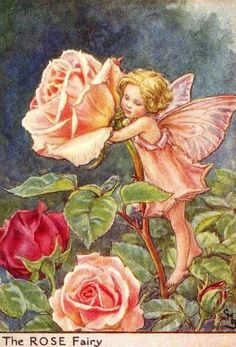 Illustration for the Rose Fairy from Flower Fairies of the Summer. The Rose fairy was first published in Flower Fairies of the Garden, Author / Illustrator Cicely Mary Barker Cicely Mary Barker, Fairy Dust, Fairy Tales, Fairy Land, Fantasy Magic, Fantasy Art, Fairy Garden Plants, Fairy Gardens, Fairies Garden