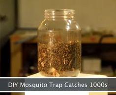 Activist Post: DIY Mosquito Trap Catches Thousands Per Night