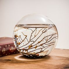 Ecosphere Closed Aquatic Ecosystem, small sphere Science Store, Cool Fish Tanks, Aquatic Ecosystem, Biology Classroom, Science Projects, Ecosphere, Aquariums, Nice Things, Garden Ideas