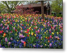 Keukenhof Motley Floral Design Metal Print by Jenny Rainbow. All metal prints are professionally printed, packaged, and shipped within 3 - 4 business days and delivered ready-to-hang on your wall. Choose from multiple sizes and mounting options. Fine Art Prints, Framed Prints, Beautiful Flowers Garden, Daffodils, Botanical Gardens, Spring Flowers, Flower Decorations, Fine Art Photography, Flower Power