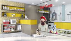 Pet Care CC Fendi e FR,TP Citrino