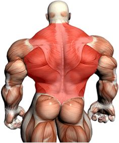 Most people do not have a clue of how to build a wide back in the gym, we reveal 4 back exercises that will build a wide back in no time at all