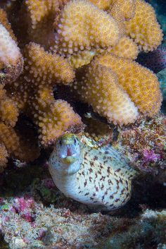 Moray Eel by Benthichi, via Flickr