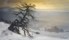 Solitude in winter by M. Tunc Kolverdi on 500px