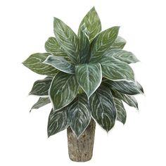 Silk Plants, Orchid Plants, Foliage Plants, Faux Plants, Indoor Plants, Fake Plants Decor, Plant Decor, Silk Floral Arrangements, Weathered Oak