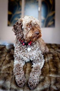 10 of the rarest dog breeds
