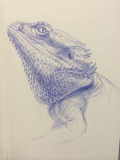 Bearded dragon, ballpoint pen by Angela Gram Animal Sketches, Animal Drawings, Art Sketches, Beautiful Drawings, Cool Drawings, Pet Dragon, Bearded Dragon, Wildlife Art, Ballpoint Pen