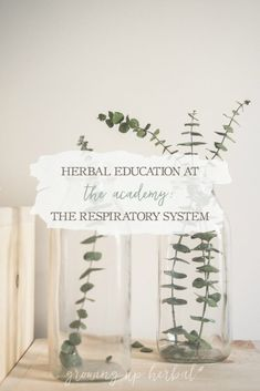 Herbal Medicine Herbal Education At The Academy: The Respiratory System Home Remedies For Spiders, Home Remedies For Hair, Natural Health Remedies, Herbal Remedies, Holistic Remedies, Natural Medicine, Herbal Medicine, Relieve Constipation, Herbs For Health