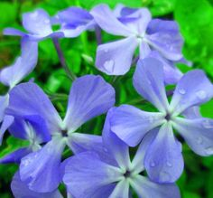 Blooming  bunch  of  blues by paradisereal on Etsy, $26.00
