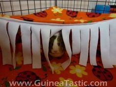 Guinea pig Curtain and hammock.  2 in 1!  NOTE:  you need to scroll down to get to the project.