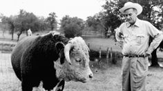 LBJ with a Hereford bull.