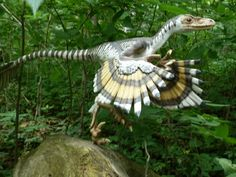 Bambiraptor...Dinosaurs in the Forest! Now Through September 30, 2012. #DinoQuest2