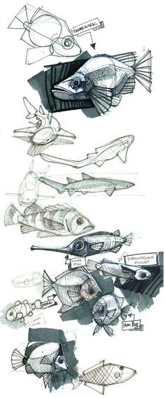 Find more at https://www.facebook.com/CharacterDesignReferences if you ar looking for: #art #character #design #model #sheet #illustration #best #concept #animation #drawing #archive #library #reference #anatomy #traditional #draw #development #artist #animal #animals #fish