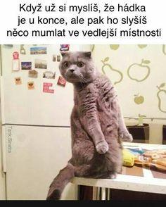 Přesný... | torpeda.cz - vtipné obrázky, vtipy a videa Cute Cat Memes, Funny Animal Memes, Funny Animal Pictures, Funny Relatable Memes, Funny Cats, Funny Animals, Funny Jokes, Hilarious, Top Funny