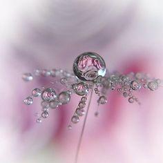 """2,019 To se mi líbí, 64 komentářů – @oukan825 na Instagramu: """"* 綿毛drop * * * LocationNagasaki Pref. * * #雫 #綿毛 #drops #pusteblume #splendid_flowers…"""""""