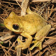 How to Get Rid of Frogs - howtogetridofstuff.com