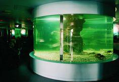 Tanques para acuarios realizados a medida. Aquariums, Tanks, Pools
