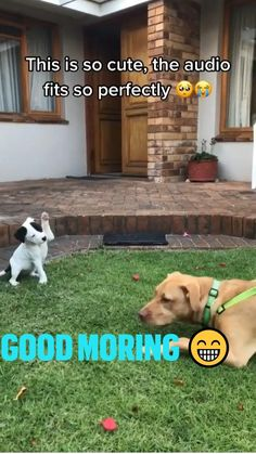 Cute Baby Dogs, Cute Funny Dogs, Cute Dogs And Puppies, Cute Funny Animals, Cute Babies, Super Cute Animals, Cute Little Animals, Funny Animals With Captions, Cute Stories