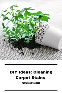 How to clean rug stains - see these ideas to get up most common stains on the rug. Cleaning Carpets, Stain Remover Carpet, Removing Carpet, Carpet Stains, How To Clean Carpet, Get Up, Gardening Tips, Cleaning Hacks, Rugs On Carpet