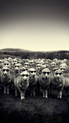!!TAP AND GET THE FREE APP! Animals Stylish Sheep Black & White Village Cool Dark Glasses HD iPhone 5 Wallpaper