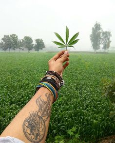How to grow marijuana and weed to produce quality buds. We show you how to be successful when you are planting pot! #weed #cannabis #stoned #high #blunted #ganja #indica #sativa https://plantingpot.com/shop/