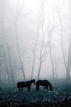 Dans la brume (by Michael Frank)
