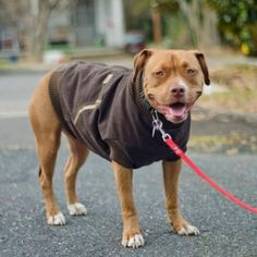 You will love this DIY Dog Coat Pattern and it's so easy to make and looks great. Save yourself money and give your pooch a designer look!