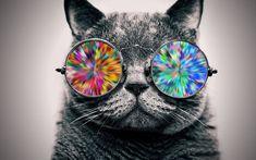 Cool hipster sunglasses iphone 6 plus hd wallpaper beautiful cat wearing cool eyeglasses hd wallpaper[ ] see more on Graphic Wallpaper, Cat Wallpaper, 1080p Wallpaper, Wallpapers, Chance The Rapper Wallpaper, Fat Cats Funny, Glasses Wallpaper, Funny Postcards, Cat Background