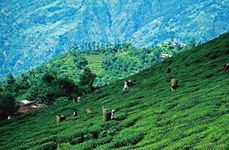 3 Star Darjeeling Tour Package