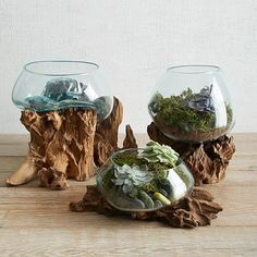 Wood + Glass Terrariums These handcrafted terrariums are made by molding melted recycled glass against the natural wood base, which singes lightly as the glass cools. Each is completely one-of-a kind. Best Indoor Plants, Indoor Planters, Air Plants, Wooden Planters, Glass Planter, Decorative Planters, Aquatic Plants, Indoor Gardening, Planter Boxes