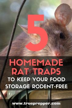 5 Homemade Rat Traps to Keep Your Food Storage Rodent-Free – Animals Urban Survival, Survival Food, Survival Tips, Survival Skills, Emergency Food Supply, Emergency Preparedness, Rat Trap Diy, Getting Rid Of Rats, Glue Traps