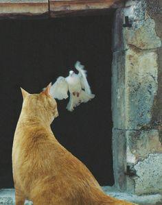 8 août, Journée internationale du chat August 8, International Cat Day