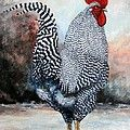 Barred Rock Rooster by Amanda Hukill
