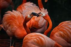 dispute in red Photo by johanna holldack -- National Geographic Your Shot