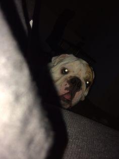 Lurking. Bane. Bulldog