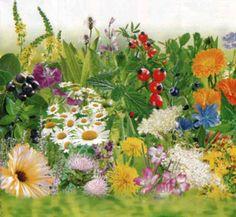 bylinky zo záhradky
