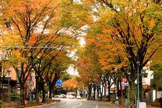 近所の紅葉の画像:九州ロマンチック街道