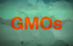 """The Tico Times reports that """"Costa Rican court hands GMO opponents a victory by declaring permitting process unconstitutional."""" http://www.ticotimes.net/2014/09/11/costa-rican-court-hands-gmo-opponents-a-victory-by-declaring-permitting-process-unconstitutional"""