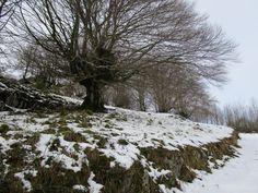 https://flic.kr/p/EJ7ZT8 | Árbol sore nieve en el monte Santa Bárbara de Gorriti (Navarra).