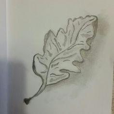 Leaf sketched by me (Jade Hurdle)