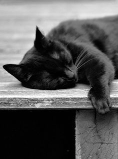 Black cat  I need my beauty sleep...