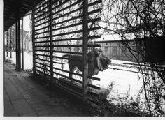 The lion at the railway station Prague-Vyšehrad (from The Unknown Prague, http://www.prahaneznama.cz/z-minulosti/lev-na-nadrazi-vysehrad/)