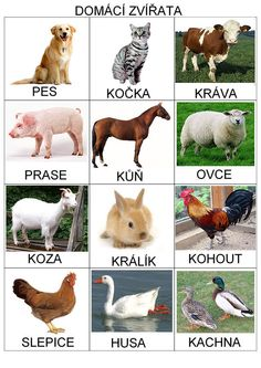 Pro Štípu: Zvířata Animal Activities, Montessori Activities, Book Activities, Preschool Themes, Preschool Crafts, Farm Animals, Animals And Pets, Web Animal, Glenn Doman